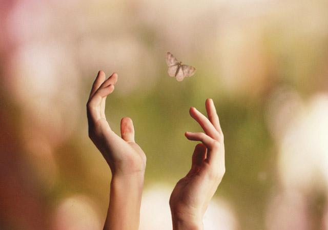 mariposa libre